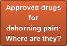 Approved drugs for dehorning pain: Where are they?