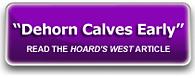 Dehorn Calves Early